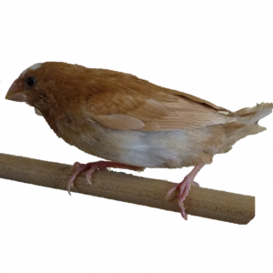 Oiseaux vivants